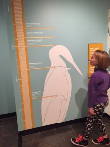 Zoe seeing how tall the giant penguin was.